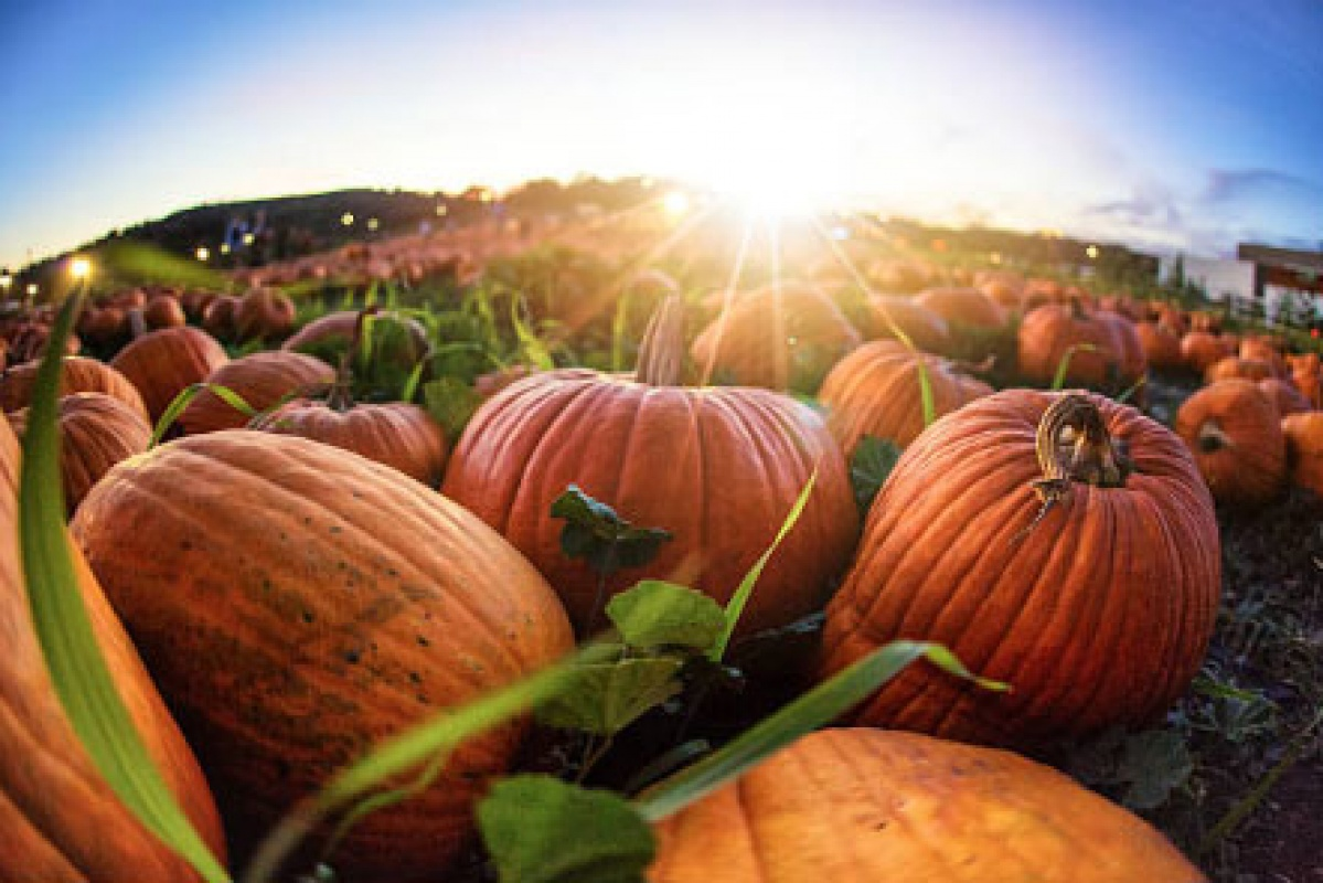 fall fest at grant's farm | stlparent