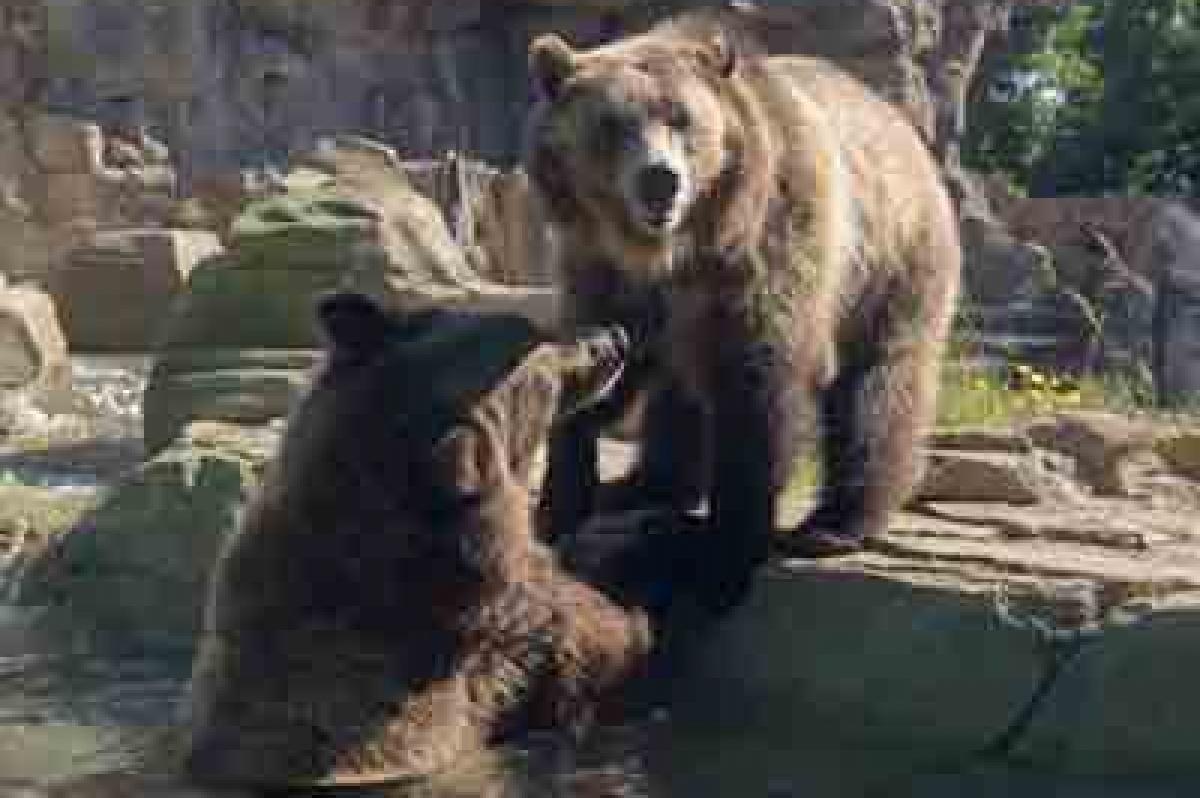 Black Friday Camp At The Saint Louis Zoo Stlparent Com